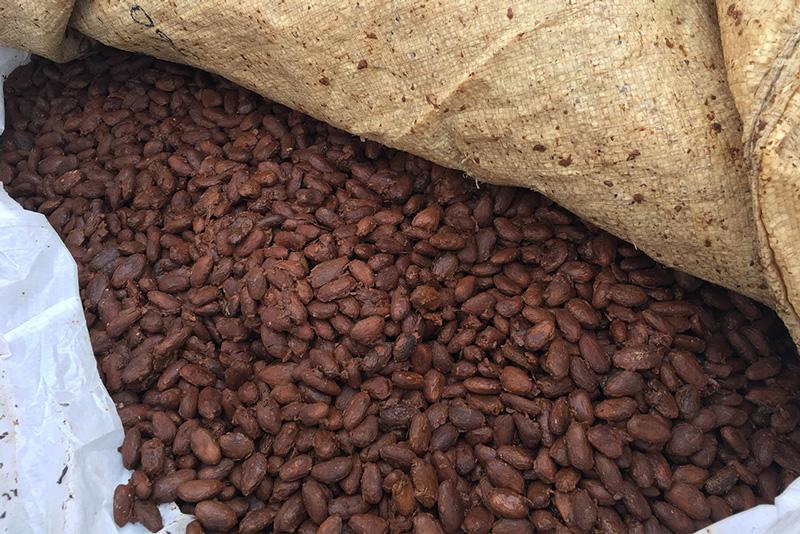 カカオ豆発酵の様子