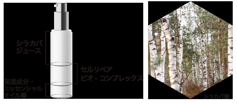 シラカバ樹